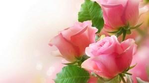 Descargar Pack Fondos de Pantalla Flores Coloridas (7)