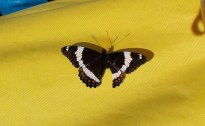 butterfly at campsite 1