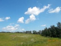 Plenty of meadows