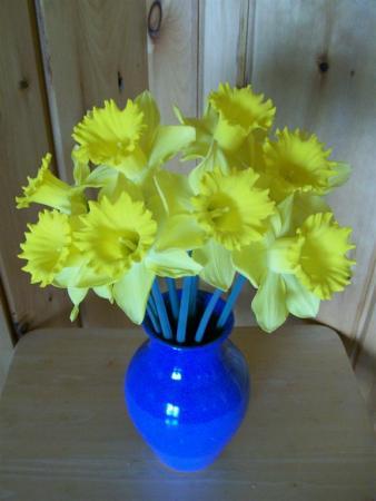 DaffodilsCorner2