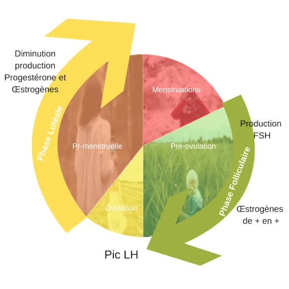 cycle-hormonal