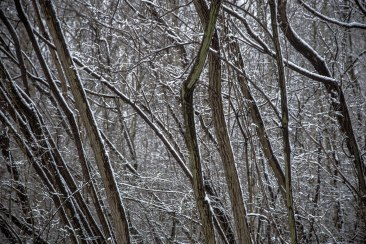 Thicket highlighted by snow