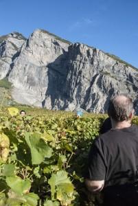 Cave du Vidomne Chamoson vines_191013
