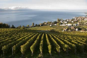 Domaine du Daley, Vaud