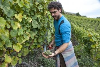 Germanier harvest Saillon picker Paien_151013