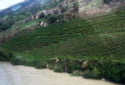 flooding Rhone vines Visp_300714