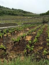 vineyards Salgesch Valais7_020515