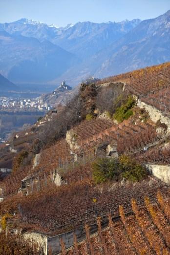 Tsampéhro vineyard2_091115