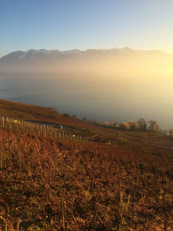 Vineyards in Lavaux late Wednesday 2 December - Epesses