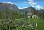 Centovalli, the Italian part, pergola vines