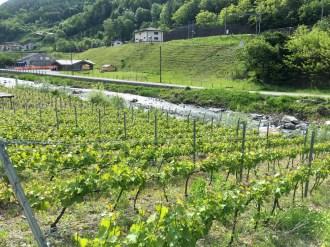 Goron vines, Dranse river