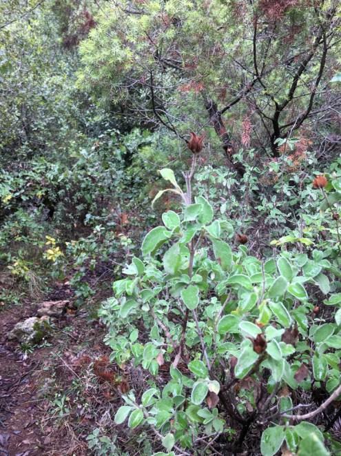 Sardinia Grotta Su Marmuri woods2 wild herbs_211016