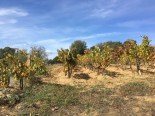 A dry land, where Cannonau grapes are at home