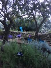 Sardinia Su Gogolone herbs garden_201016