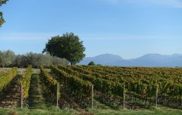 vineyards Italy Montefalco Persicaia+261017