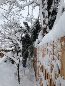 snow-mr-p-saving-trees-and-power-lines