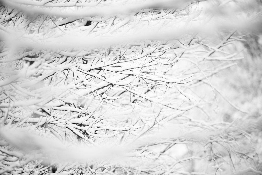 Texture – Cleveland Ohio Photographer