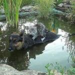 Σκύλος σώζει γάτα από τις πλημμύρες στη Βοσνία.