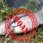 Καταρρίπτεται – «Ψάρι με πόδια» τρομάξει ανθρώπους στο Κολοράντο!