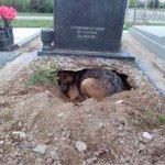 Καταρρίπτεται – Ο πιο Πιστός Σκύλος: Ζούσε σε ένα λάκκο στον τάφο του ιδιοκτήτη του.