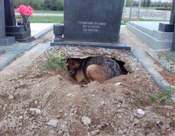 dog-in-grave1