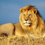 Υπήρχαν ποτέ λιοντάρια στην Ελλάδα ;