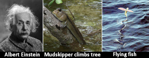 mudskipper02