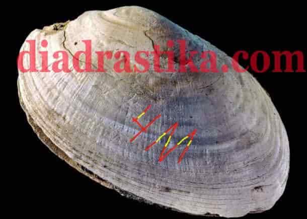 engraved-shell-diadrastika-logo-min