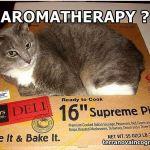 Εναλλακτικές θεραπείες κατοικιδίων; Guess again!