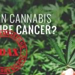 Μπορεί η κάνναβη να θεραπεύσει το καρκίνο;