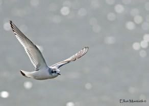BMW Little Gull 3_edited-1