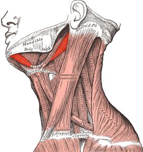 neck_greys_anatomy