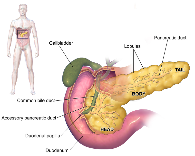 Endocrine System The Bodys Way Of Talking Elliots World