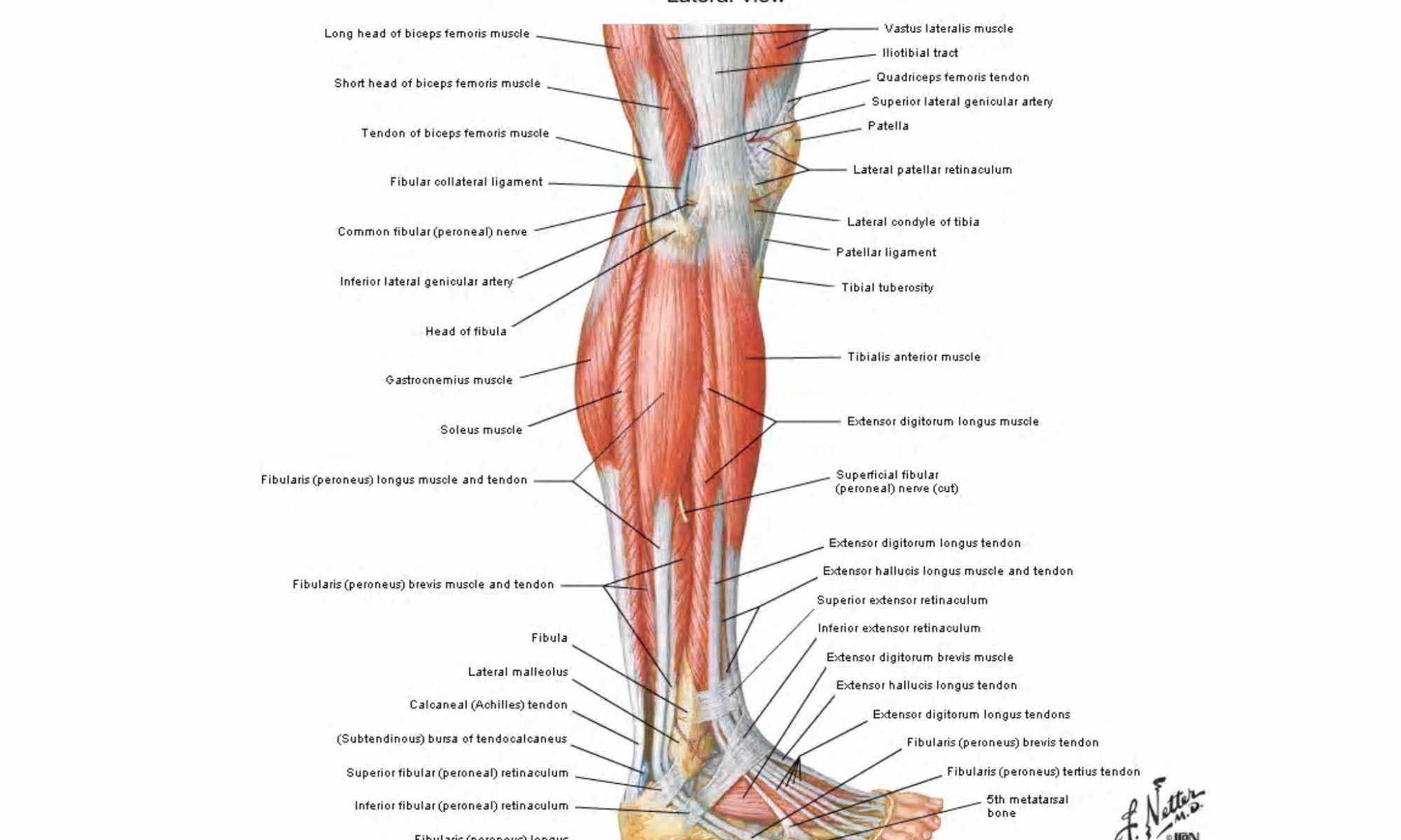 yoga anatomy Archives - Elliots Blog