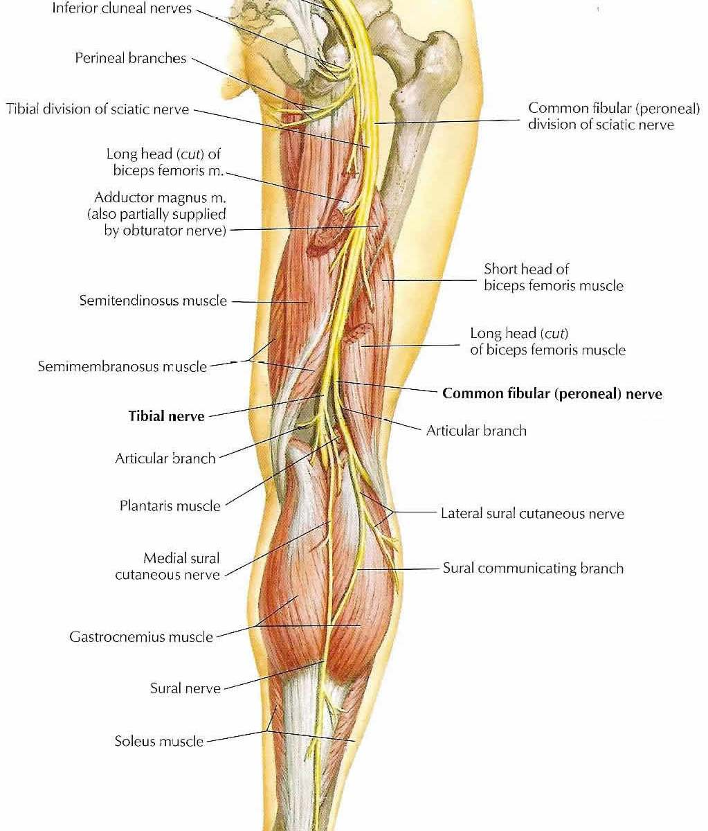 anatomy for yoga Archives - Elliots Blog