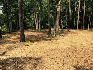 Tree service Lot Clearing RVA