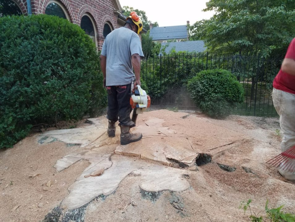Stump Removal Services in Richmond Virginia