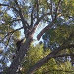 tree trimming richmond va