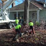 tree removal rva