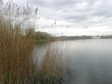 Lake nr South Cerney