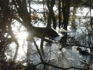 Flooded icy hedgerow, Jan 2015