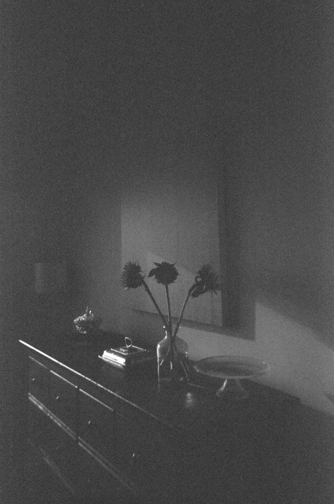 Image from a JCH StreetPan Kassha single use camera. Underexposed, flowers, indoor, still life.