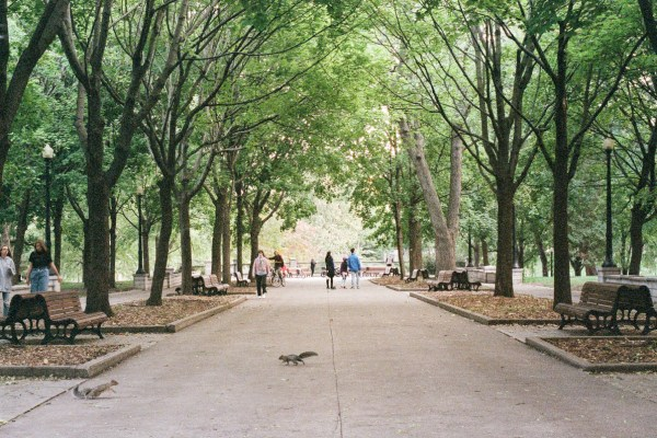 An image of a pathyway in Parc La Fontaine in Montreal.
