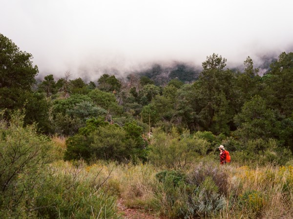 A foggy morning in Chisos Basin.