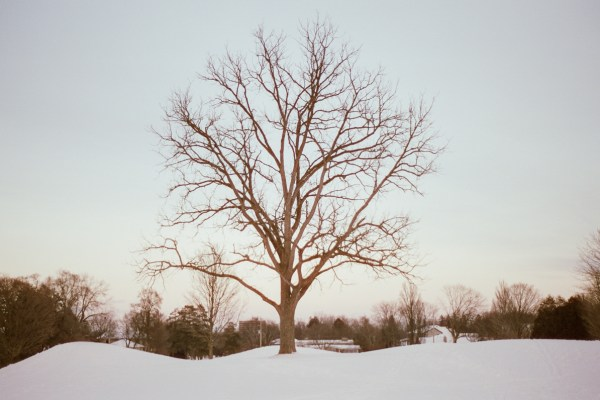 A snowy landscape with a tree.