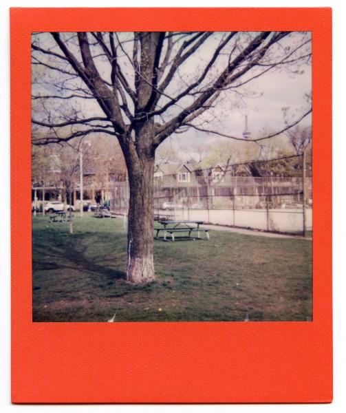 A Polaroid photo of Trinity Bellwoods Park.