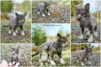 kissa & hiiri | ELLUNHUOPA
