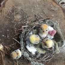huovutettu lintu | ELLUNHUOPA