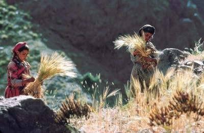 أسطورة الأنثروبوغونيا الأمازيغية