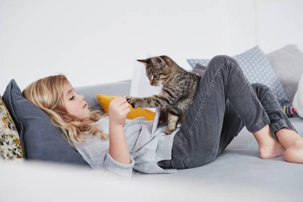 لماذا نحبُّ امتلاك القطط ؟